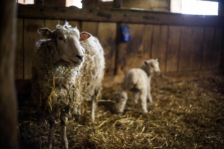 Riverdale Farm in Toronto - Travel Photography